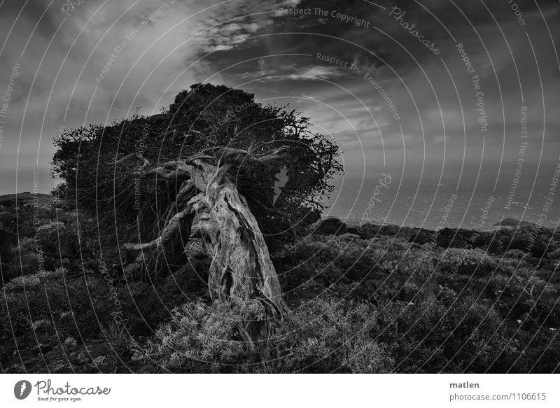 gebeugt Himmel Natur Pflanze weiß Baum Meer Landschaft Wolken schwarz Berge u. Gebirge natürlich Gras Küste Horizont Wetter Sträucher