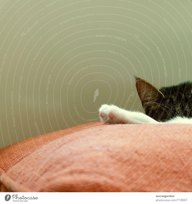 prinzessin auf der erbse Kissen Katze Tier Krallen Katzenpfote Pfote Erholung ausgestreckt weiß hängen Stoff Physik kuschlig rot gemütlich lümmeln Material