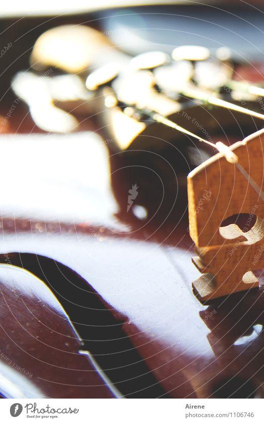 streichzart Musik Musik hören Konzert Geige Saiteninstrumente Musikinstrument Streichinstrumente schallloch musizieren elegant fleißig Ausdauer Leistung üben