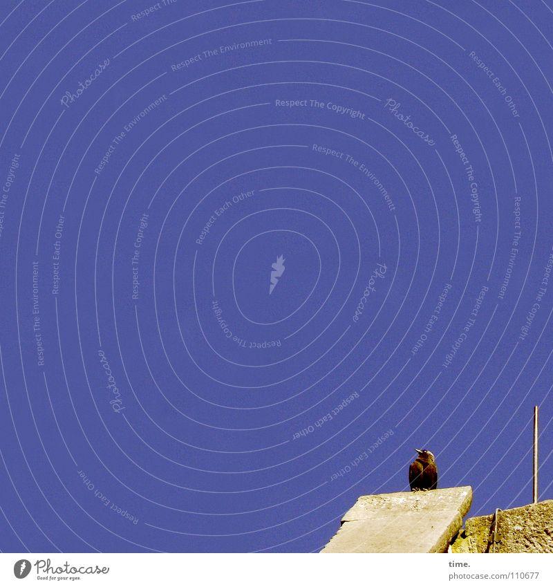 Heute mal nur in den Himmel gucken Himmel Ferien & Urlaub & Reisen blau ruhig Vogel oben träumen Feder Dach Pause Wohlgefühl Vertrauen Feierabend Antenne Sandstein Dohle