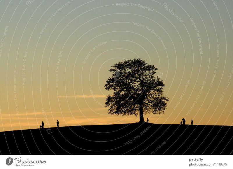 Schattenspiele Sonnenuntergang Baum dunkel schön Herbst Wolken gelb blau
