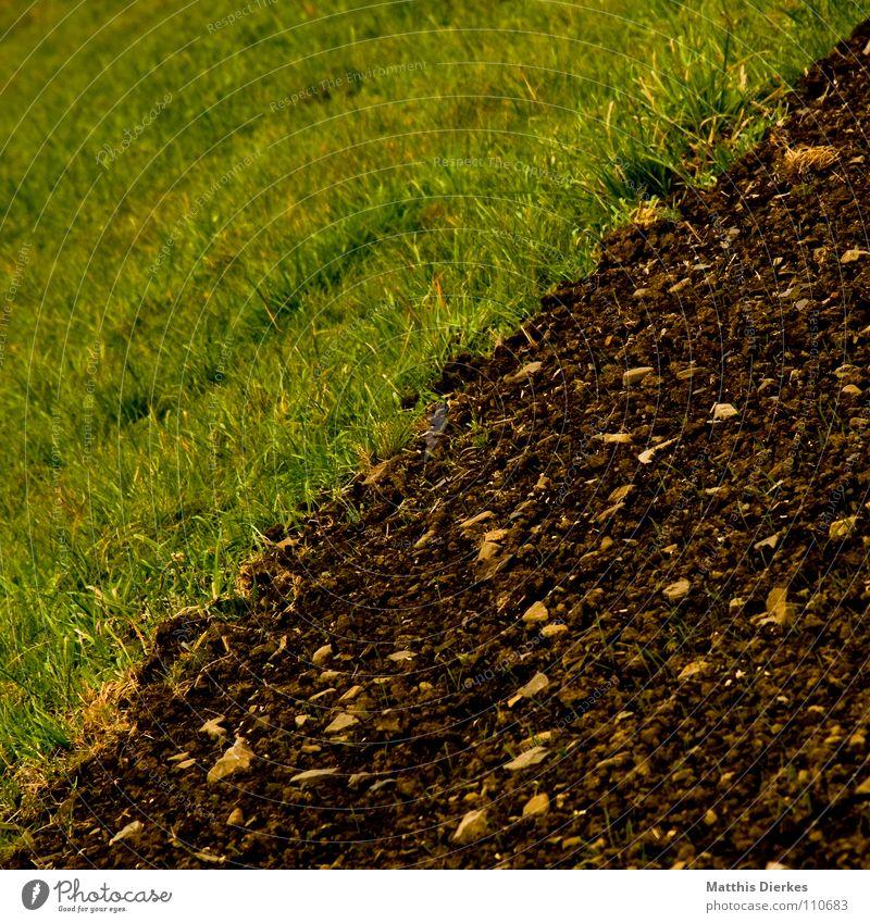 / - jubilee Feld Wiese Herbst Sommer Landwirtschaft Arbeit & Erwerbstätigkeit Horizont trist Trauer Botanik Jungpflanze Nebel Herbstwetter Regen Ordnung