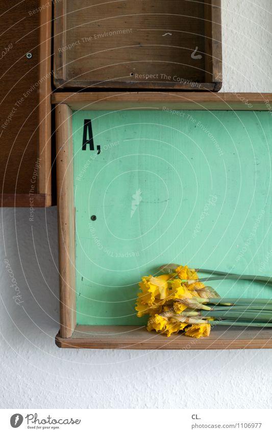 A, Häusliches Leben Wohnung einrichten Dekoration & Verzierung Raum Blume Regal Schublade Wand Tapete Holz Schriftzeichen braun gelb türkis Farbe einzigartig