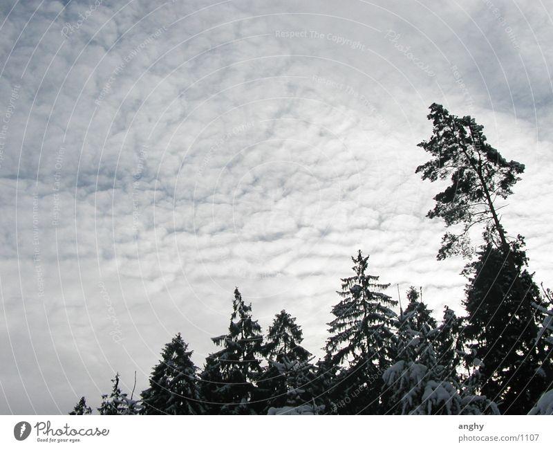 Richtung Himmel Baum Winter Wolken