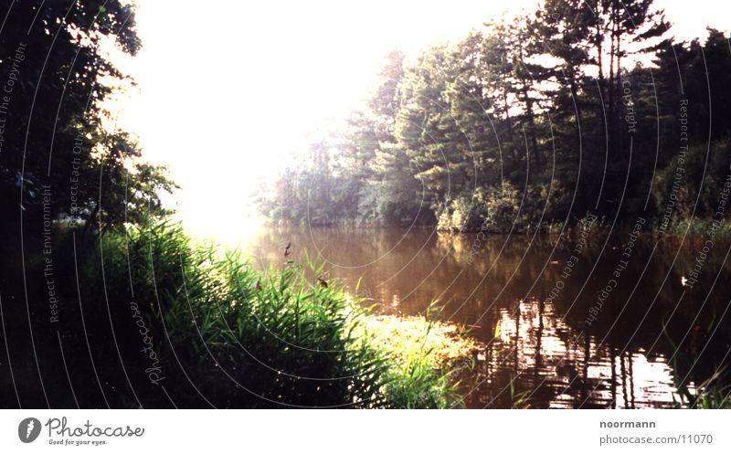 peace on earth Natur Sonne grün Wald See Stillleben
