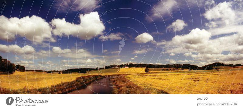 Schwedisches Kino Ferne Sommer Landwirtschaft Forstwirtschaft Umwelt Natur Landschaft Pflanze Urelemente Himmel Wolken Horizont Klima Schönes Wetter Nutzpflanze