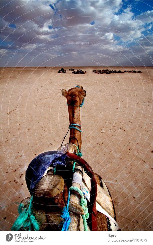 tunesien Lifestyle Umwelt Natur Sand Wolken Oase Wasserfahrzeug Tier Fährte blau braun grün Farbe lkpro Camel cammello wüst Deserto Tunesien Tunis Sabbia colori