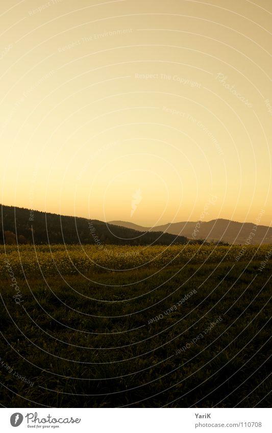 herbstrot Sonnenuntergang Nebel Dämmerung Abend Feld Rapsfeld Hügel Wald Wiese Horizont Herbst kalt Gras dunkel orange Abenddämmerung Berge u. Gebirge
