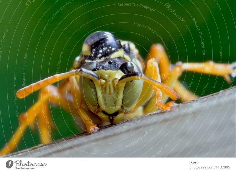 grün Farbe grau Tropfen Insekt Pfote Fluggerät Wespen Unterleib wehtun