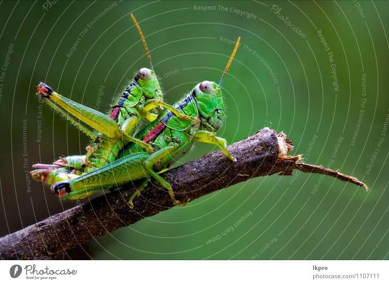 Natur grün Farbe Tier schwarz Umwelt Liebe braun Lifestyle Wildtier Sex Insekt Pfote Unterleib