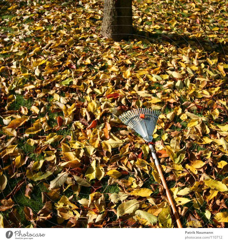 typische Herbstarbeit.. Baum Blatt Arbeit & Erwerbstätigkeit Gras Biomasse bedecken herbstlich Rechen Kompost