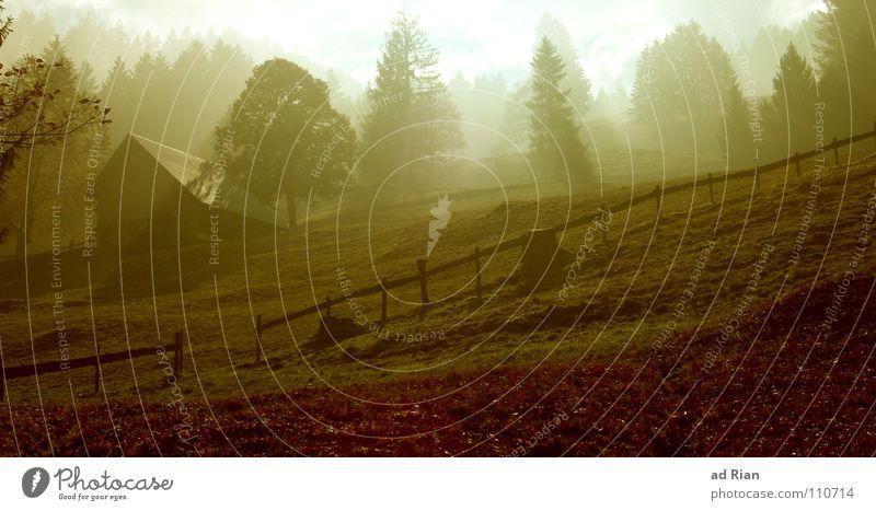 I'll be coming home Haus Herbst Wetter Nebel Wärme Baum Hütte fantastisch kalt braun grün Erkenntnis Zaun Hüttenzauber Licht Hügel Berghütte Einsamkeit