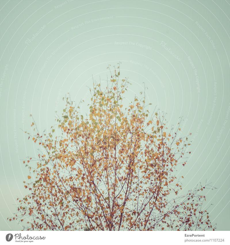 gegen den Trend Himmel Natur blau Pflanze Baum Blatt Landschaft Wald Umwelt gelb Herbst natürlich braun orange leuchten ästhetisch