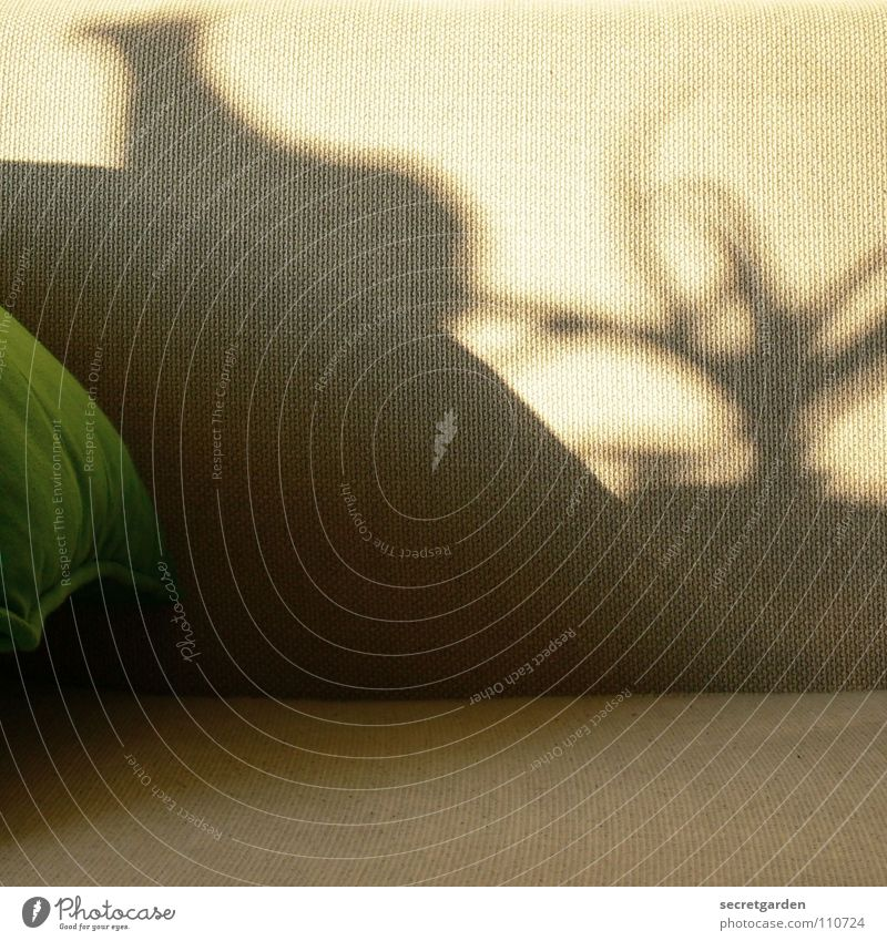 was seht ihr? Sonne grün Pflanze Winter ruhig Erholung Herbst Arbeit & Erwerbstätigkeit Spielen grau Fernsehen Freizeit & Hobby Dekoration & Verzierung