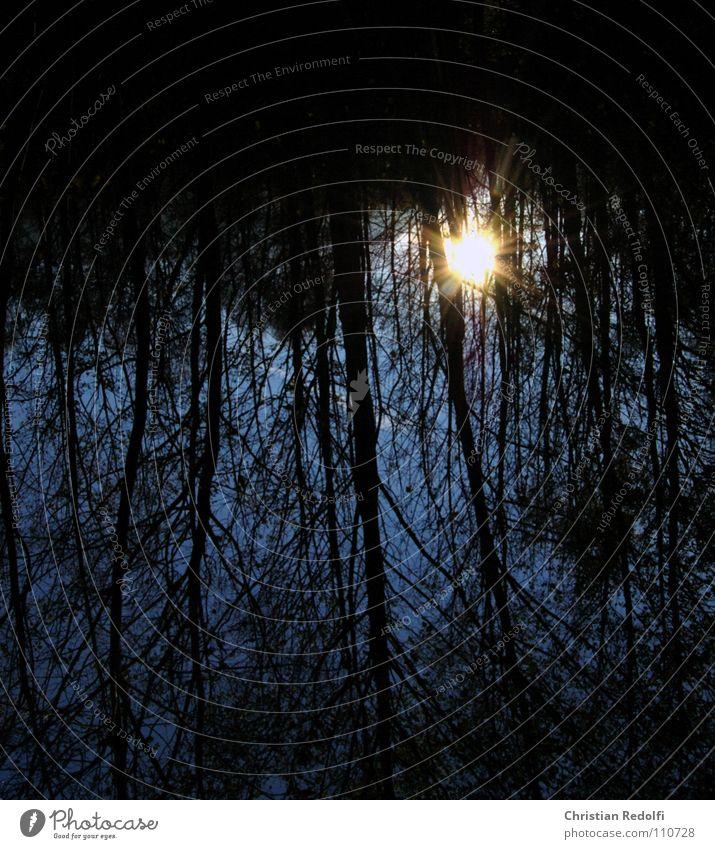 Sonnen Spiegelung Wasser blau ruhig gelb Wald Erholung Herbst Stimmung Trauer Spaziergang Ast Verzweiflung Geäst erinnern Laubbaum