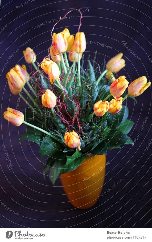 Geburtstagstulpen - für Barbaclara elegant Stil Pflanze Blume Tulpe atmen Blühend ästhetisch natürlich schön gelb schwarz Frühlingsgefühle Leichtigkeit