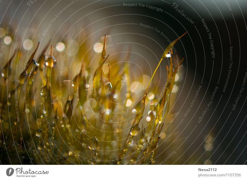 Wasserzeichen | Morgentau Natur Pflanze Sommer Wald Umwelt gelb Wiese Frühling klein Garten glänzend Park Luft Erde ästhetisch
