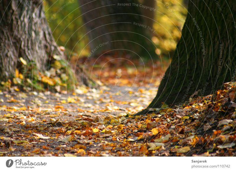 Greenleaves was yesterday Herbst Wald Herbstwald Blatt Baum Fußweg Joggen Park gelb braun grün Baumstamm Baumrinde Kies Englischer Garten Sträucher Wege & Pfade