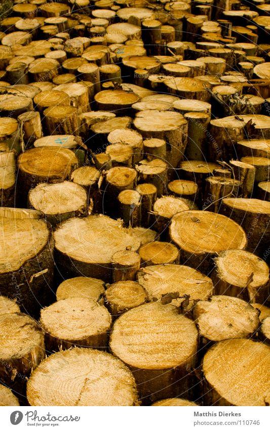holz Natur Baum Wald Holz mehrere rund Baumstamm Stapel Haufen schwer Schaden roh Fichte Buche Brennholz Rohstoffe & Kraftstoffe