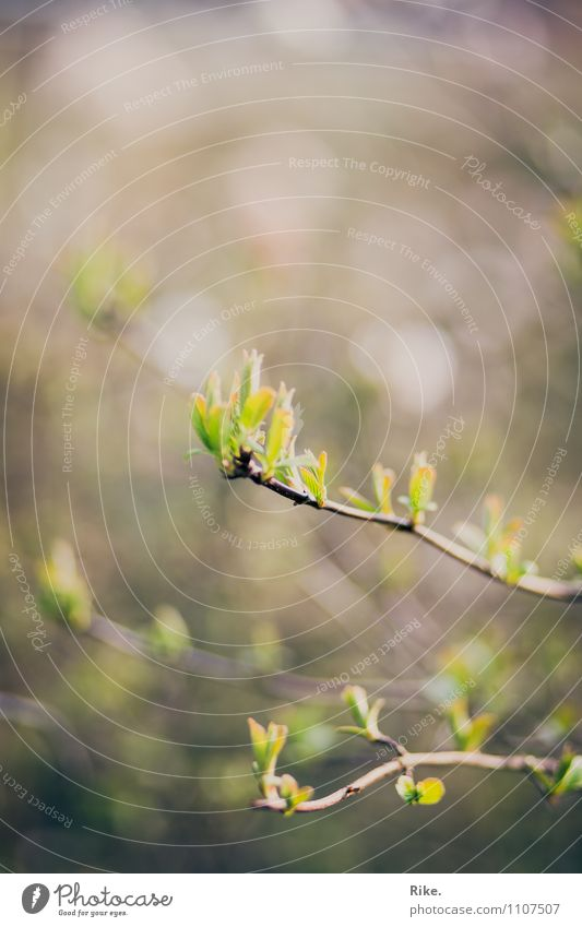 Neuanfang. Umwelt Natur Pflanze Frühling Baum Sträucher Blatt Blüte Grünpflanze Garten Park Blühend Wachstum natürlich grün Hoffnung Beginn Fortschritt Leben