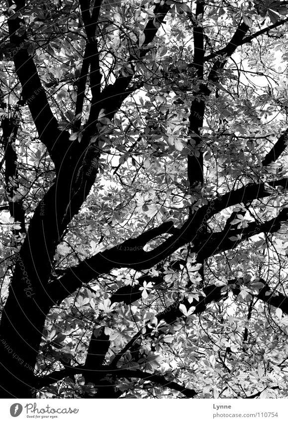 grauer Herbst Baum Blatt Herbstwetter Jahreszeiten schwarz weiß Wald Ast