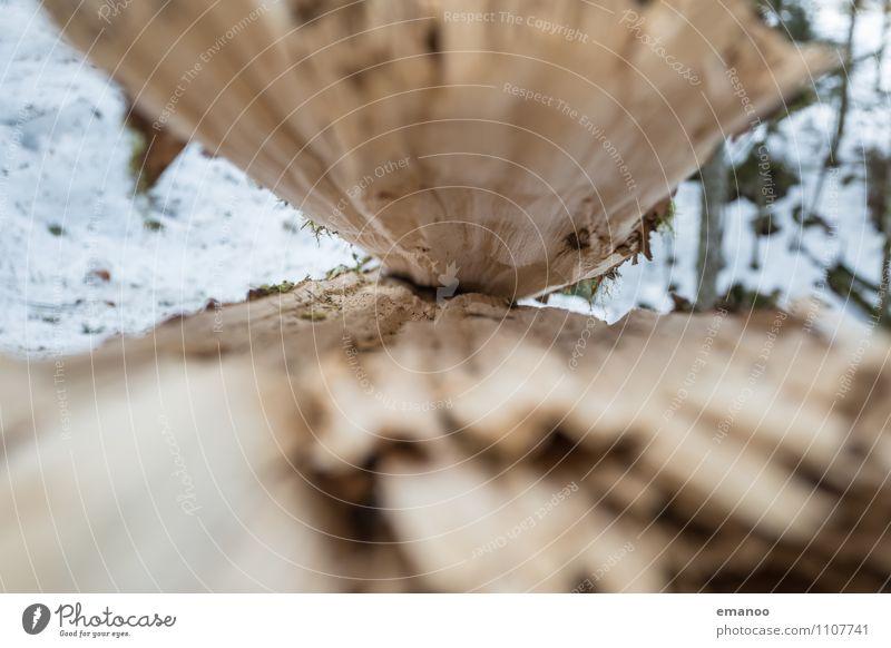 Das offene Maul Natur Landschaft Pflanze Winter Klima Klimawandel Unwetter Eis Frost Baum Wald Wachstum alt dünn kalt kaputt braun gebrochen Zerstörung