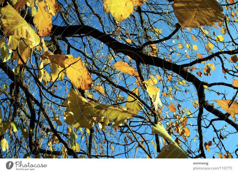 Blätterei Natur Himmel Baum Blatt Herbst Ast