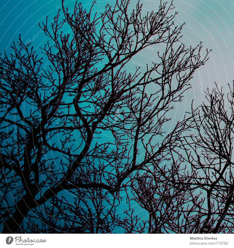 herbstbäume Himmel blau grün Baum Wolken dunkel Herbst Beleuchtung Tod Stimmung Regen Nebel Angst verrückt gefährlich fantastisch