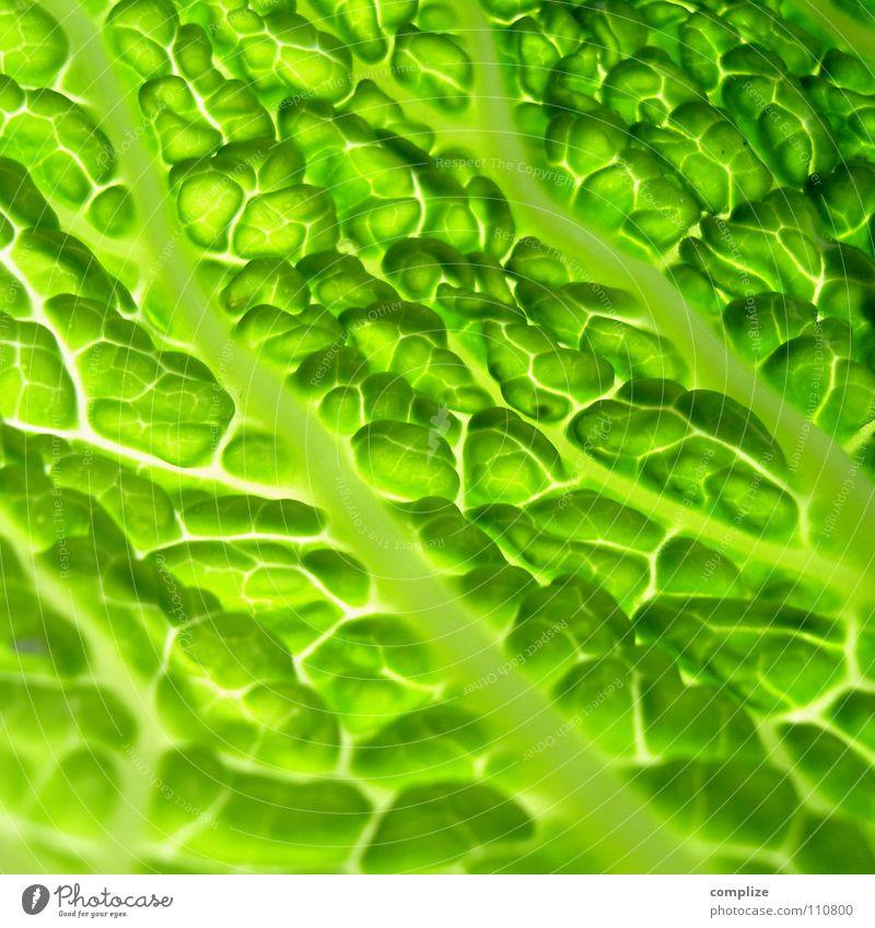wirsing Wirsing Kohl kochen & garen Küche Gesundheit Gesunde Ernährung frisch Salatblatt grün Gefäße Blattadern Licht Beleuchtung Nahaufnahme
