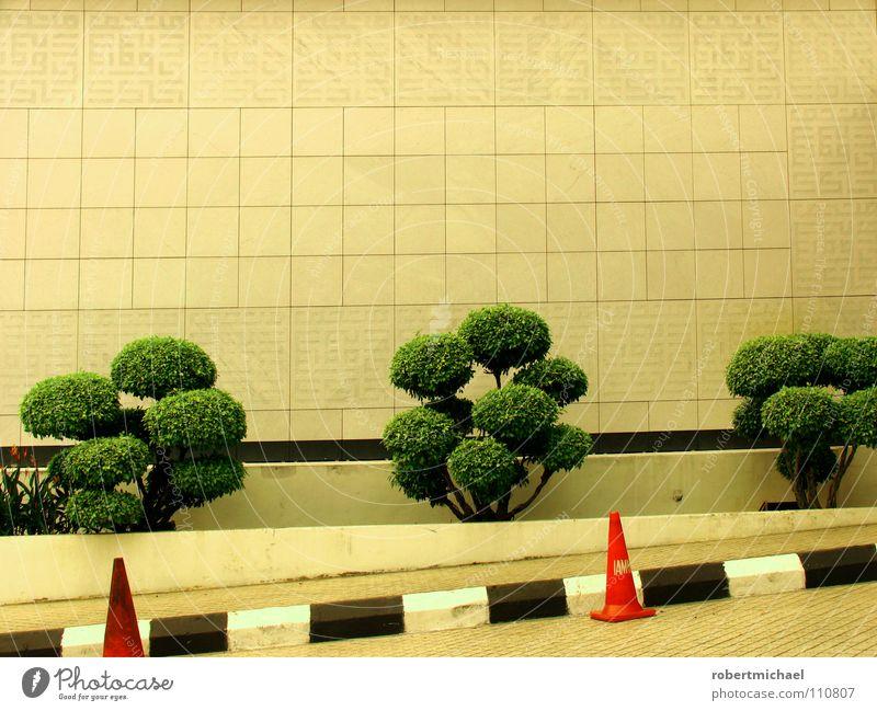 schräge hütchen grün weiß Baum Haus schwarz Straße Wand Mauer klein Stein orange leuchten mehrere Schilder & Markierungen Sträucher verrückt