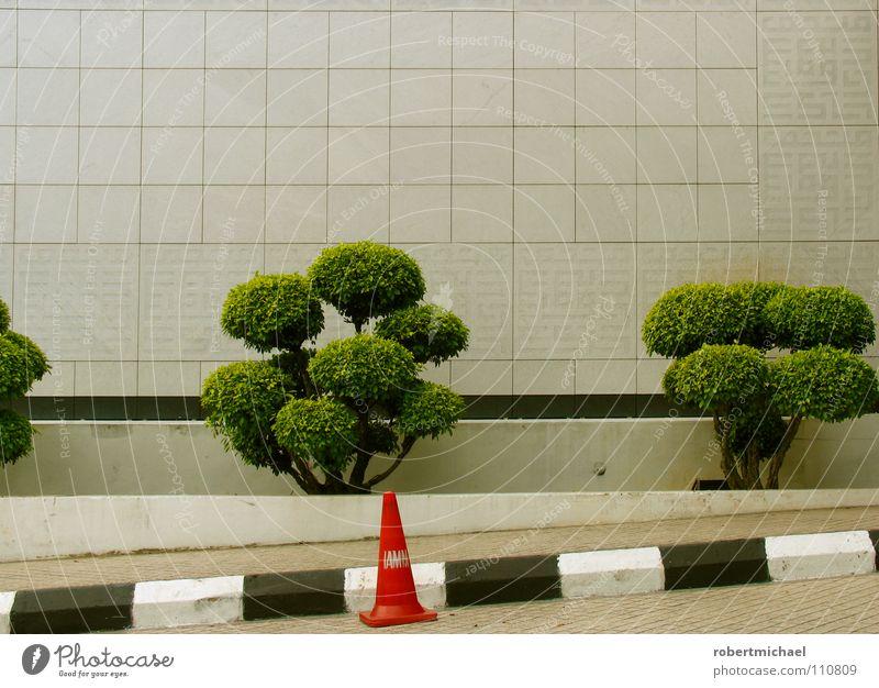 schräger hut Bonsai Wand Baum klein Geäst Sträucher Hut Verkehrsleitkegel Fahrbahnmarkierung schwarz weiß gestreift grün Instant-Messaging Gelassenheit einzeln