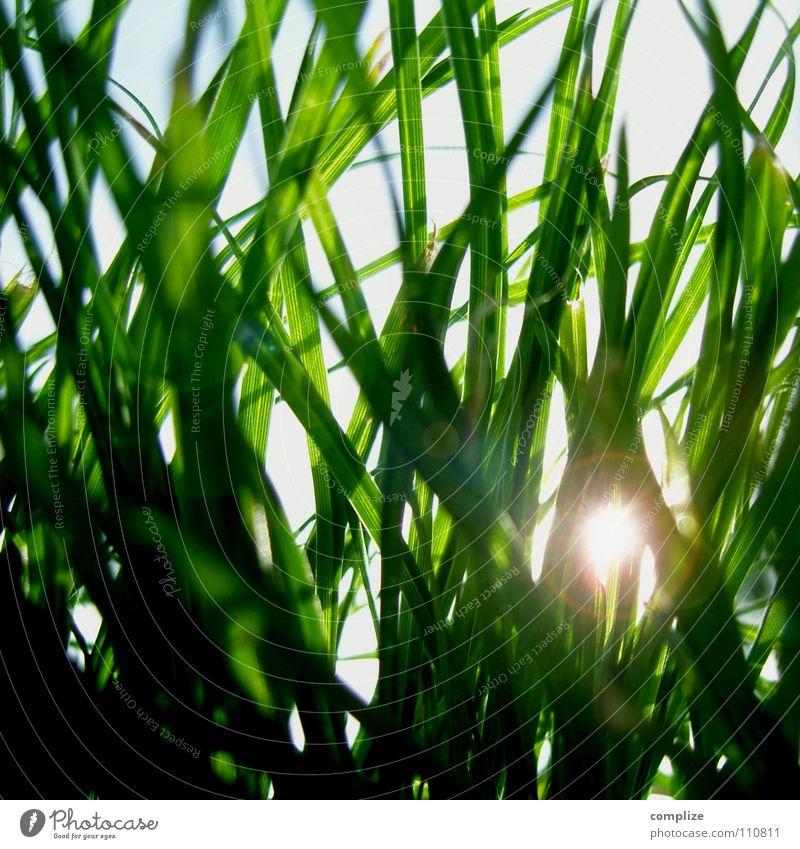 sonnenschutz Gras Wiese Sonnenstrahlen Sommer Frühling Froschperspektive Physik grün Park Halm Nahaufnahme Abendsonne Sonnenuntergang Sonnenaufgang Beleuchtung