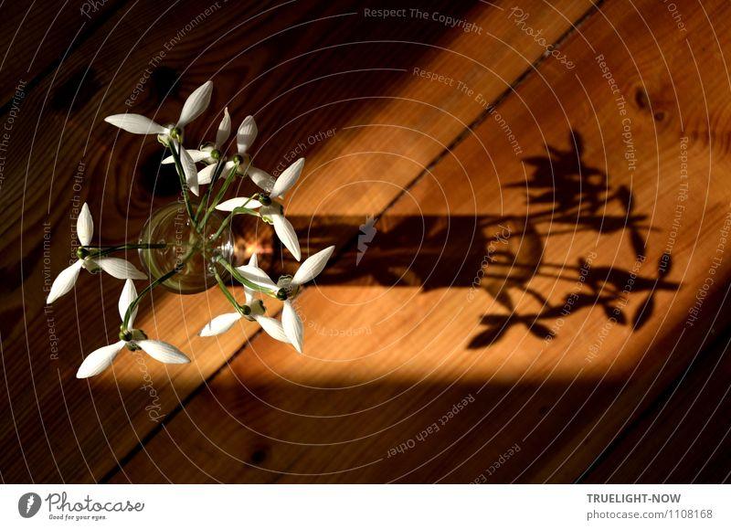 !Trash! 2015   bringt mich auf *180! Pflanze Sonne Frühling Schönes Wetter Blüte Schneeglöckchen Holzfußboden Dekoration & Verzierung Vase Glas ästhetisch