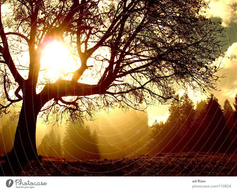 MIRACLE Sonne Himmel Wolken Herbst Wetter Wärme Baum kalt braun Erkenntnis Licht Gegenlicht Baumkrone Silhouette Naturwuchs Lichtstrahl Sonnenstrahlen