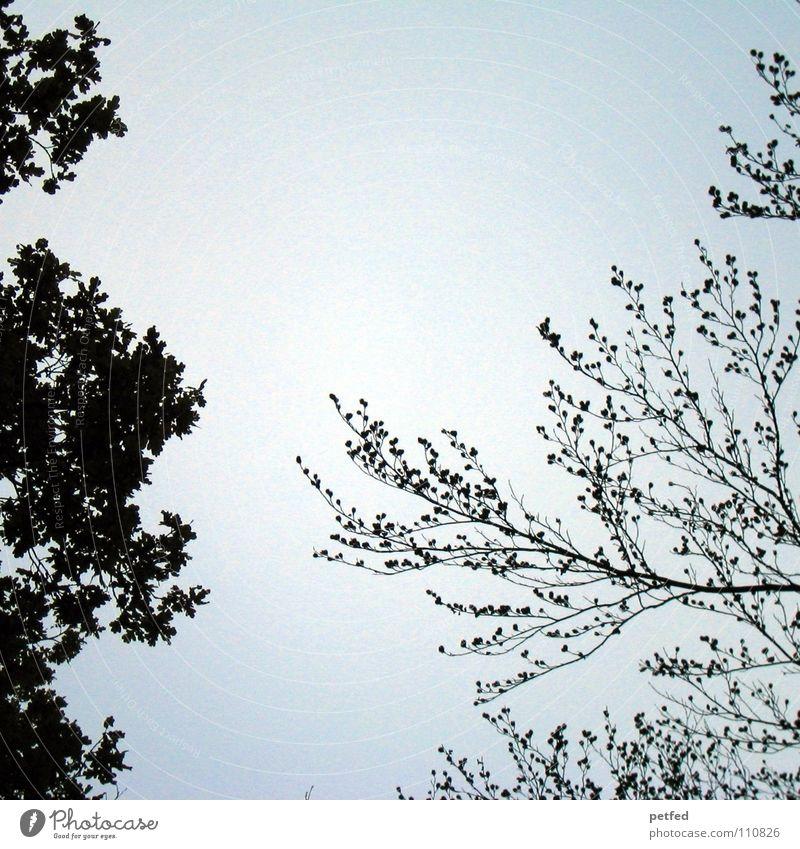Baumkronen XII Herbst Wald Blatt Winter schwarz weiß unten Wolken Himmel Ast Zweig Natur blau Schatten hoch fallen Wind