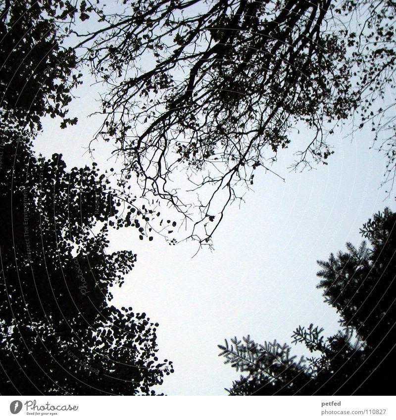 Baumkronen XIII Natur Himmel weiß blau Winter Blatt schwarz Wolken Wald Herbst Wind hoch fallen Ast unten