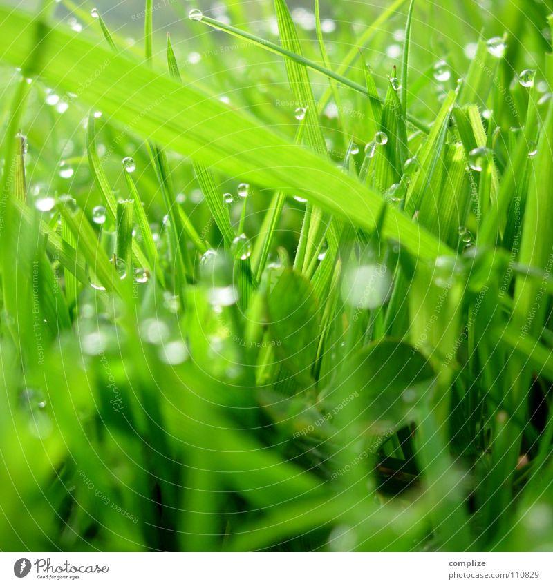 Wiese² Gras Tau Halm Park Nahaufnahme grün Sommer Frühling Klee nass feucht Alm rund eckig Pflanze Reifezeit Wachstum Umweltverschmutzung Sauberkeit Wasser
