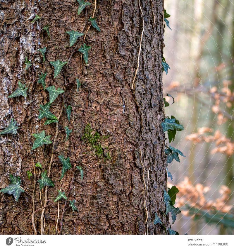 lebensadern Natur Urelemente Frühling Pflanze Baum Wald Zeichen Erfolg natürlich grün Partnerschaft Kontakt Leben Zusammenhalt Efeu Baumrinde Baumstamm