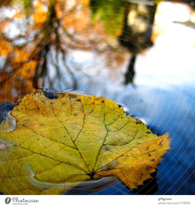 oktober Blatt Herbst Oktober Pfütze gelb mehrfarbig Reflexion & Spiegelung Baum nass Friedhof Vergänglichkeit herbstlich Wasser Himmel Sonne Im Wasser treiben