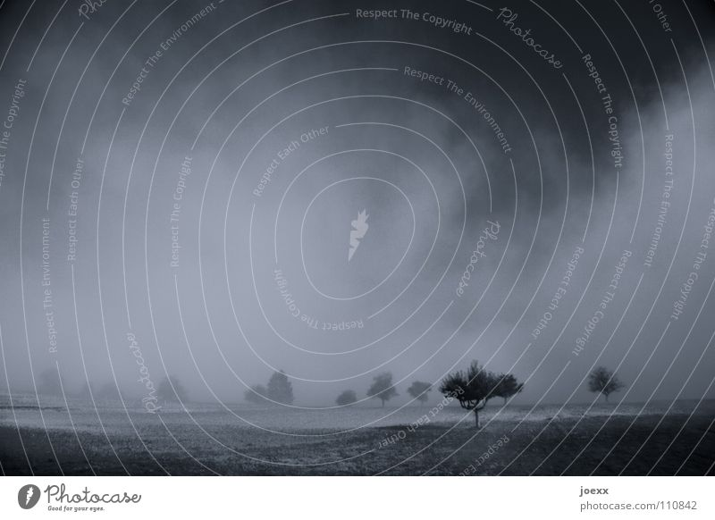kommen und gehen Angst Baum Baumreihe Bodennebel dunkel Erholung Erinnerung Morgen Tau grauenvoll gruselig Herbst Idylle Nebel Nebelwand unklar poetisch
