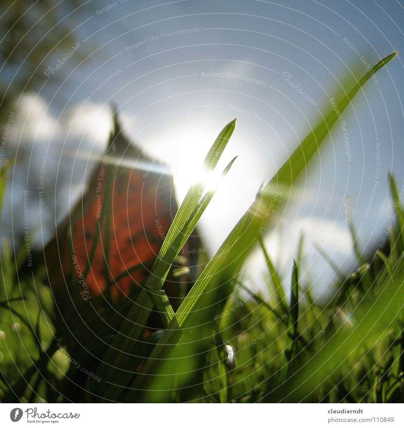 Käfers Erwachen Sonne grün Blatt Lampe Herbst Wiese Gras hell Beleuchtung klein frisch Perspektive Rasen Meinung Halm durchsichtig