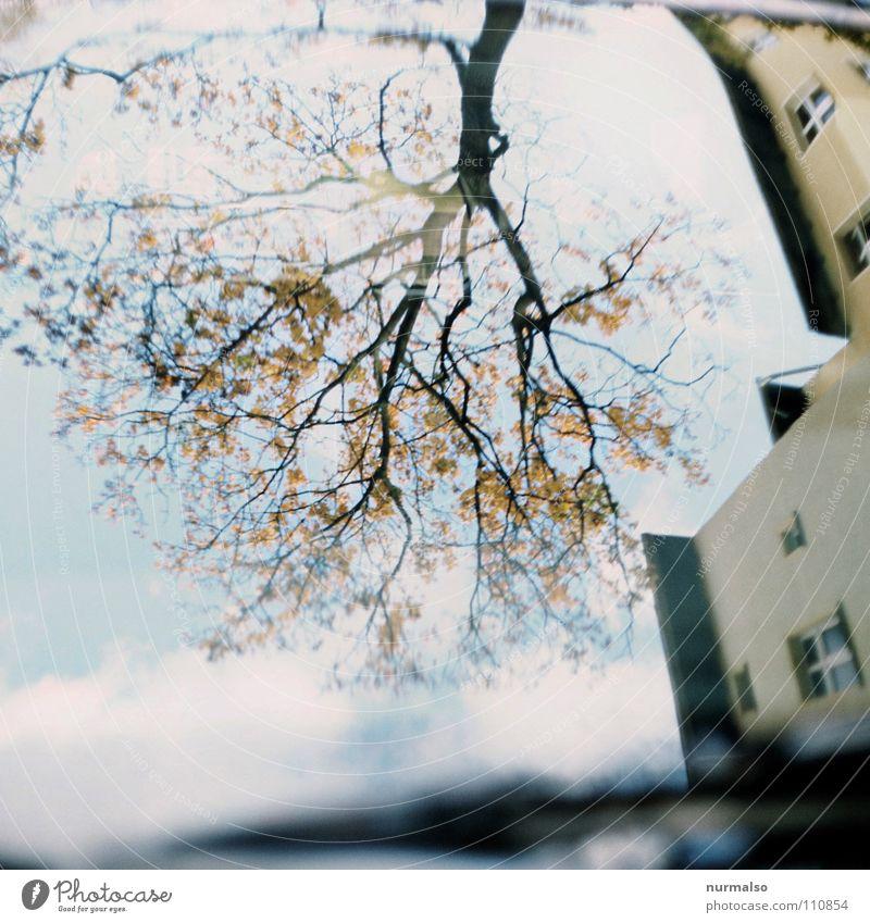 Wurzelbaumast Himmel blau Baum Haus gelb Herbst Glas frei Vergänglichkeit Fensterscheibe Spiegelbild Vorderseite Scheibenwischer