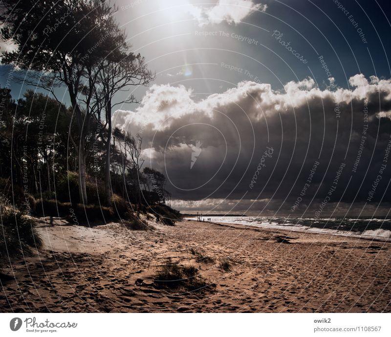Nordlicht Umwelt Natur Landschaft Wasser Himmel Wolken Gewitterwolken Horizont Sonne Sonnenlicht Klima Wetter Schönes Wetter Baum Sträucher Wellen Küste Strand