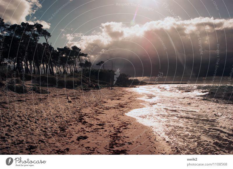 Seelenlandschaft Mensch Umwelt Natur Landschaft Sand Luft Wasser Himmel Wolken Gewitterwolken Horizont Schönes Wetter Wind Baum Sträucher Wellen Küste Strand