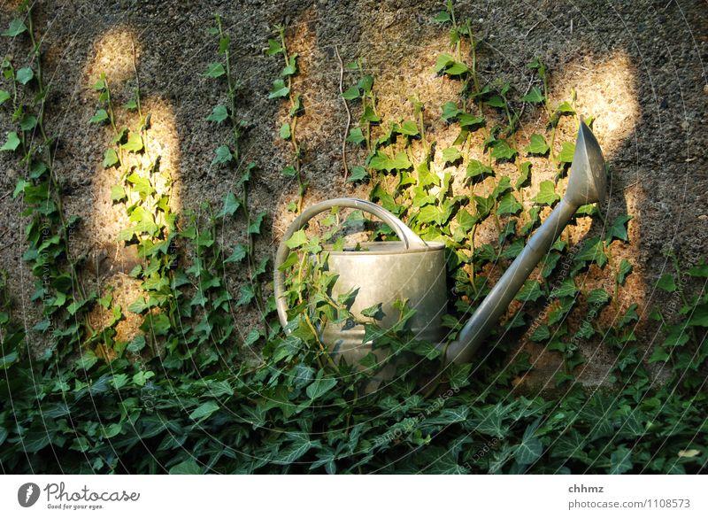 Verwunschen Gärtner Gartenarbeit Pflanze Efeu Mauer Wand Kannen Gießkanne Metall geheimnisvoll Verhext Sonnenstrahlen Zink verzinkt bewachsen Farbfoto
