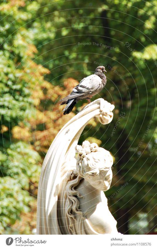Schöne Aussicht Skulptur Pflanze Tier Baum Park Vogel Taube 1 Stein sitzen oben grün weiß Gelassenheit ruhig Marmor Ferne erhaben historisch Laubbaum Laubwald