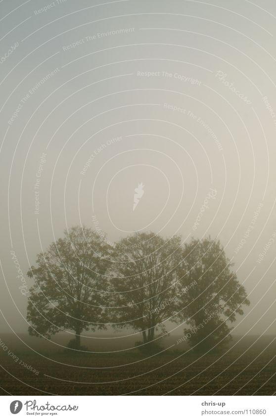 Bäume im Nebel 1 Natur grün Baum Blatt Winter Wolken Landschaft dunkel Herbst grau braun Regen Erde Feld Idylle