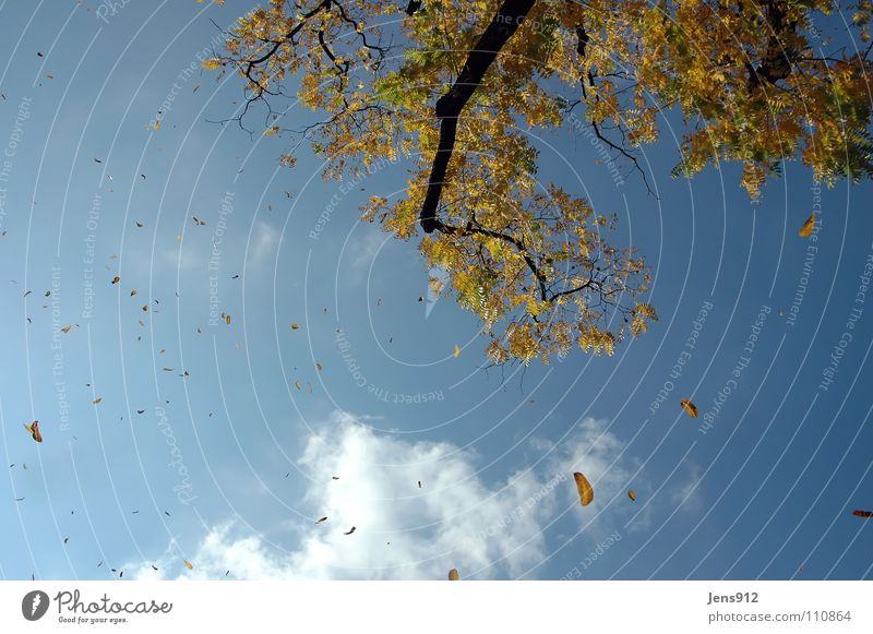 Herbstwind Himmel Baum blau Blatt Wolken gelb orange Wind Ast Zweig