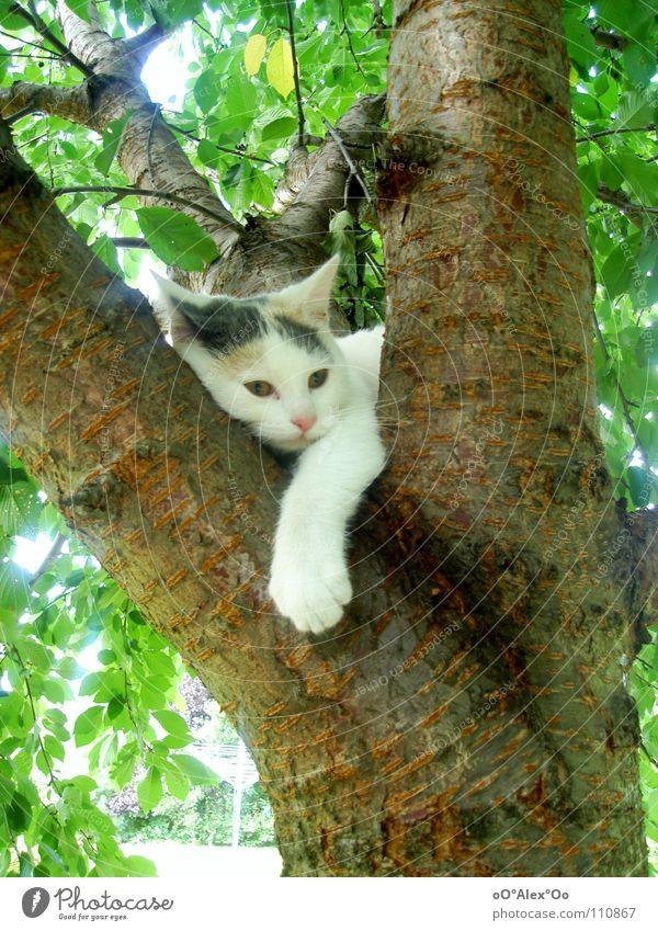 Chill out Katze Erholung Frühling träumen Zufriedenheit Frieden Langeweile Säugetier
