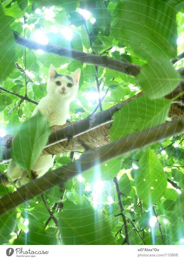 hoch hinaus Katze grün Baum Tier Frühling hell Neugier Baumkrone Säugetier
